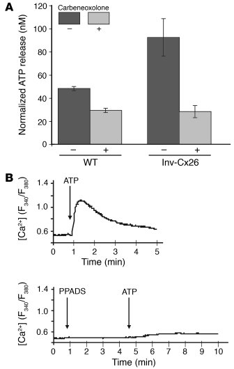 Connexons regulate extracellular ATP release to control intracellular ca...