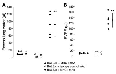 MHC I mAb produces ALI in BALB/c mice. Gravimetric excess lung water (A)...