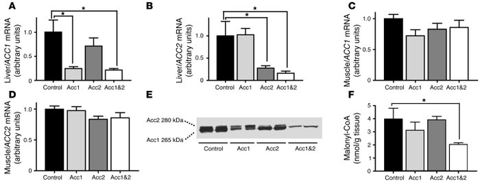 Acc ASOs decrease ACC expression and lower malonyl-CoA levels in rat liv...