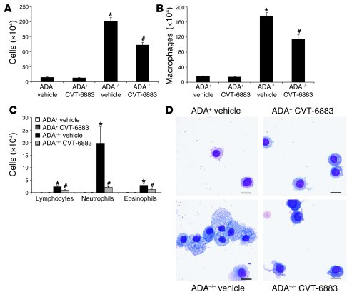Airway inflammatory cells in mice treated with CVT-6883. (A) BAL fluid w...
