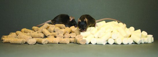 HCM mice fed a phytoestrogen-supplemented soy diet versus a soy-free cas...