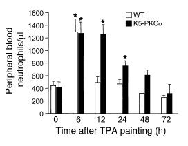 K5-PKCα mice develop a sustained neutrophilia in response to TPA paintin...