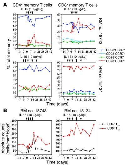 IL-15–responsive memory subsets do not accumulate in peripheral blood. (...
