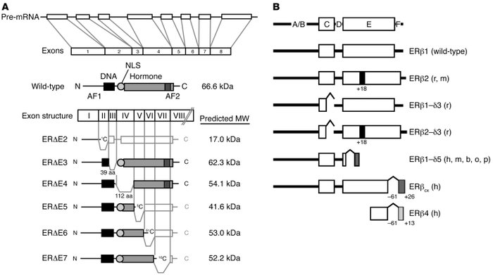 Exon structure, primary transcript, and common mRNA splice variants of t...