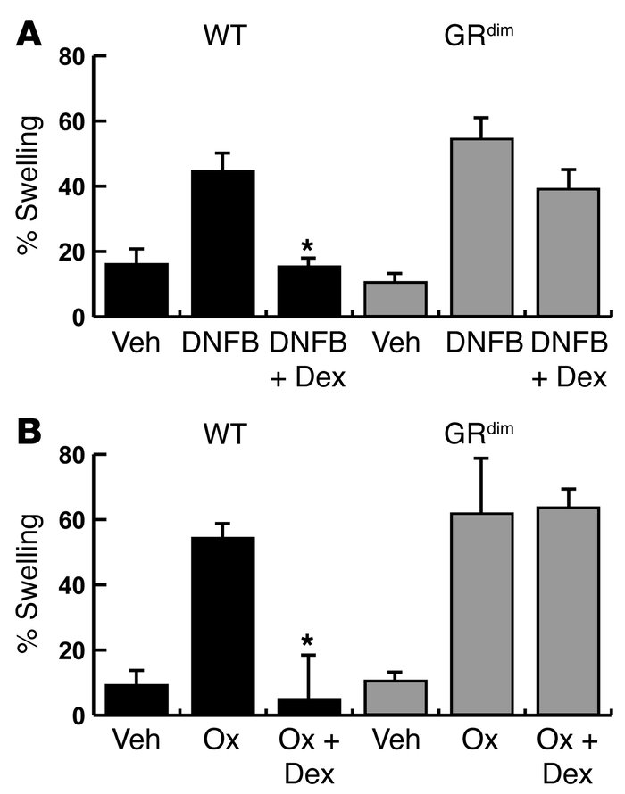 GC-mediated suppression of CHS is impaired in GRdim mice. (A) Swelling r...