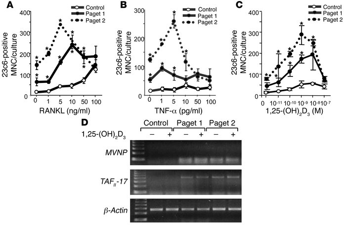 OCL formation and expression of MVNP and TAFII-17 in GM-CFU from p62P392...
