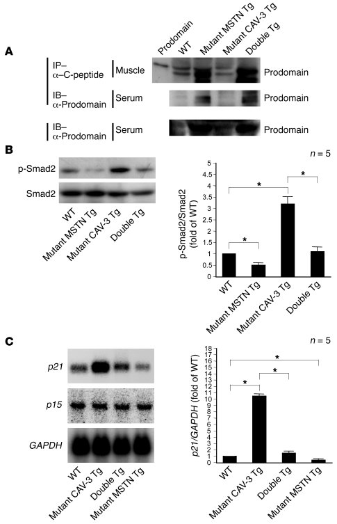 JCI - Muscular atrophy of caveolin-3–deficient mice is