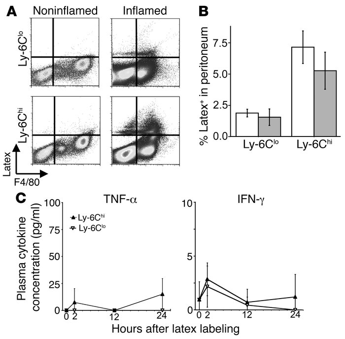 Recruitment of labeled WT monocytes to peripheral sites of acute inflamm...