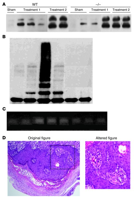 Examples of blot and image doctoring. (A) The 3 rightmost bands were cle...