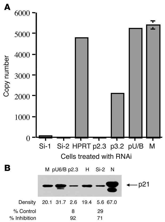 Inhibition of p21 expression by RNAi. (A) Inhibition of p21 mRNA express...