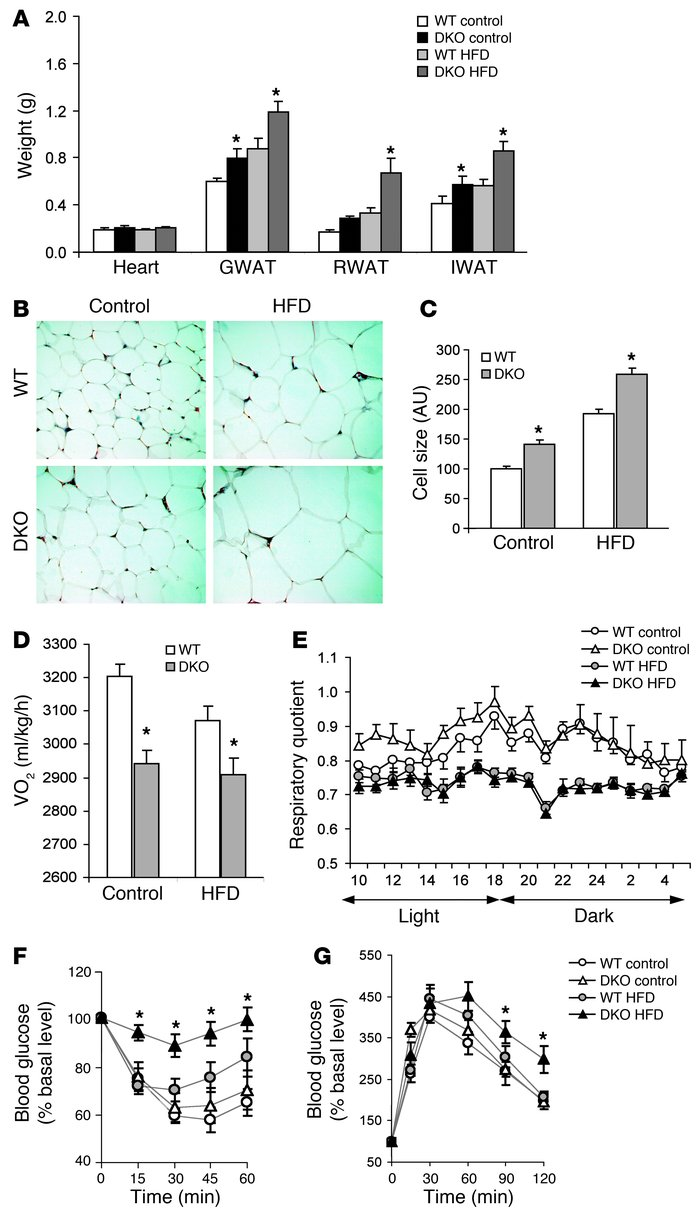 Increased obesity and insulin resistance in 4E-BP1 and 4E-BP2 DKO mice. ...