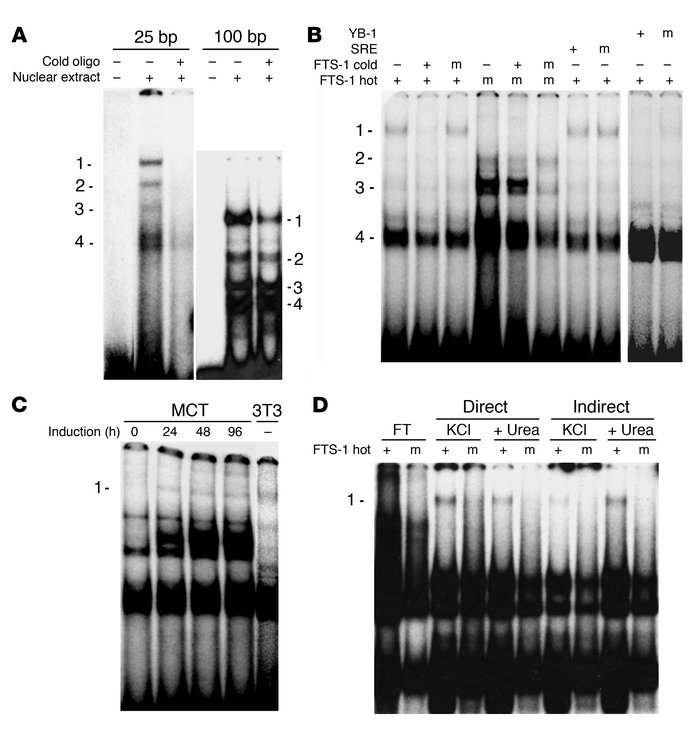 Identification and purification of the FTS-1 complex by EMSA and DNA aff...