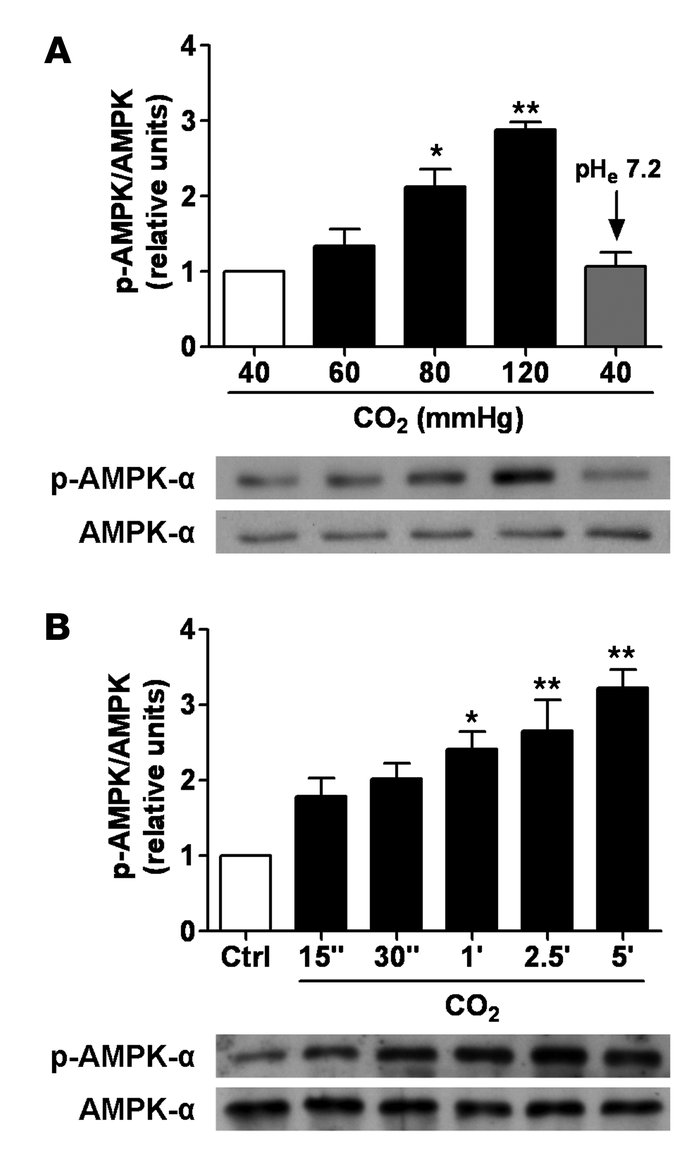 High CO2 levels activate AMPK in a concentration- and time-dependent man...