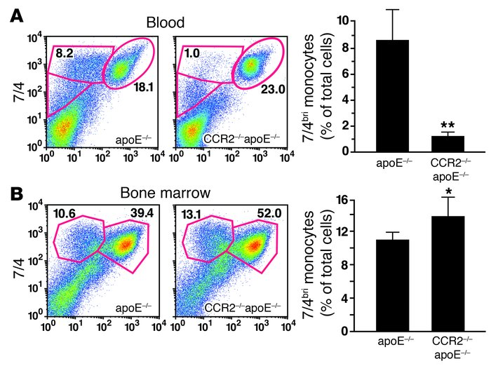 Monocyte retention in the bone marrow in CCR2–/– mice.                 a...