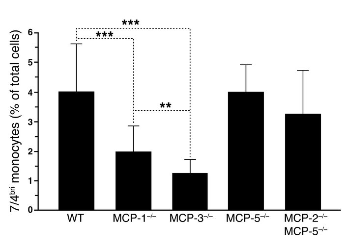 Decrease in the level of 7/4briLy-6G– monocytes in MCP-3–/– and MCP-1–/–...