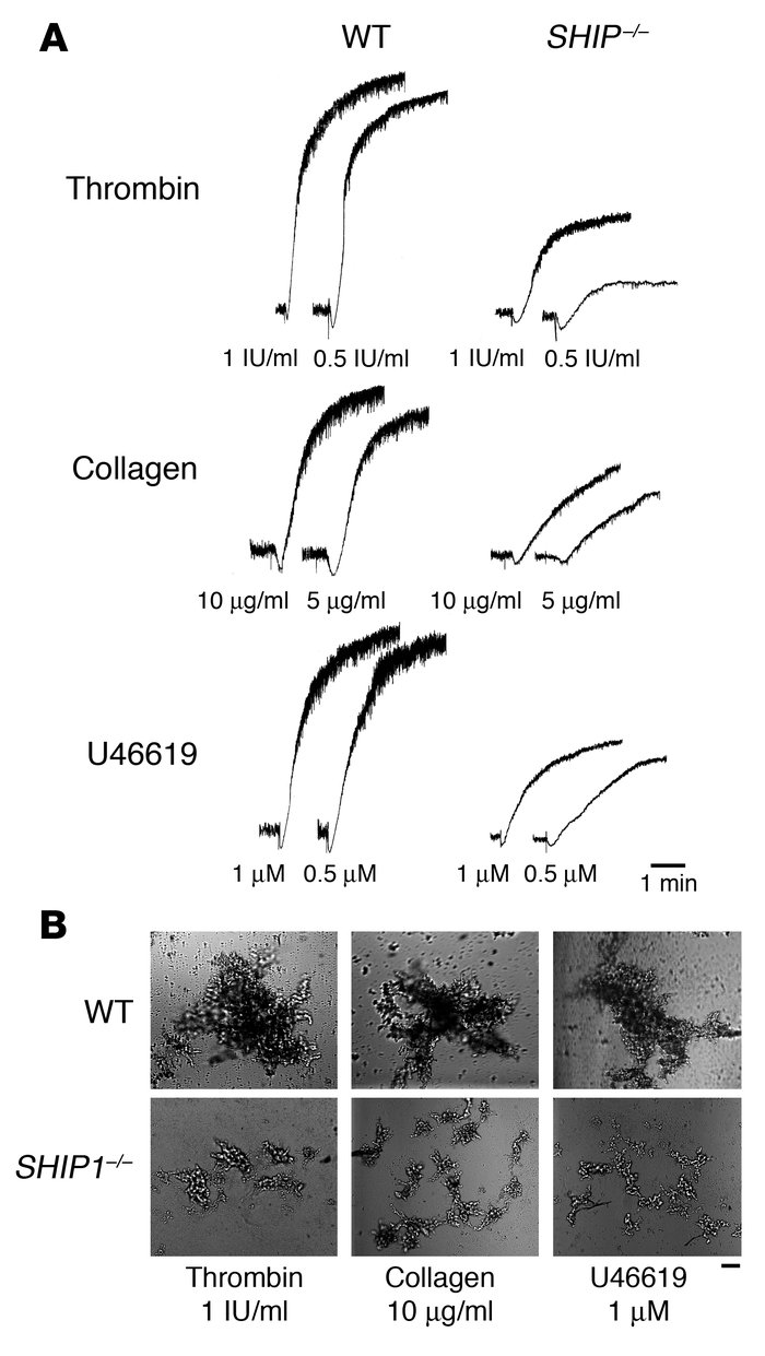 Aggregation defects in SHIP1-deficient platelets. (A) Platelets were sti...