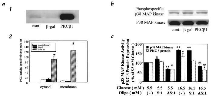 JCI - Glucose or diabetes activates p38 mitogen-activated