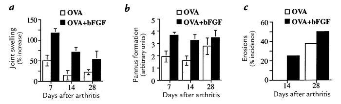 The proangiogenic cytokine bFGF intensifies arthritis. (a) The addition ...