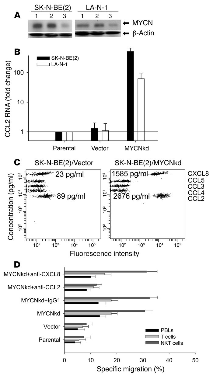 MYCNkd induces CCL2 expression in neuroblastoma cells and NKT cell chemo...