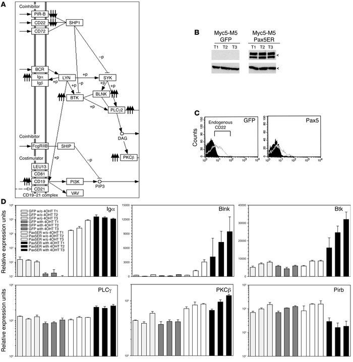 Pax5 affects expression of BCR signaling components. (A) Mapping of Pax5...