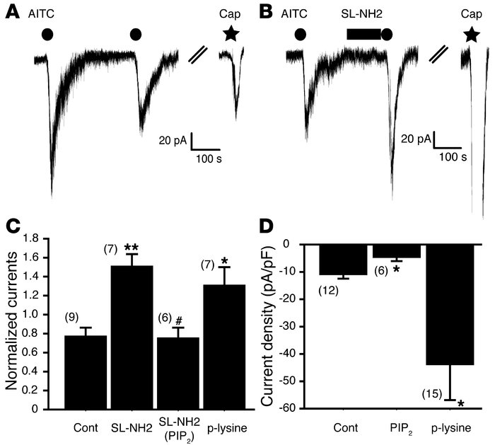 SL-NH2 sensitizes TRPA1 channel in DRG neurons. (A and B) Representative...