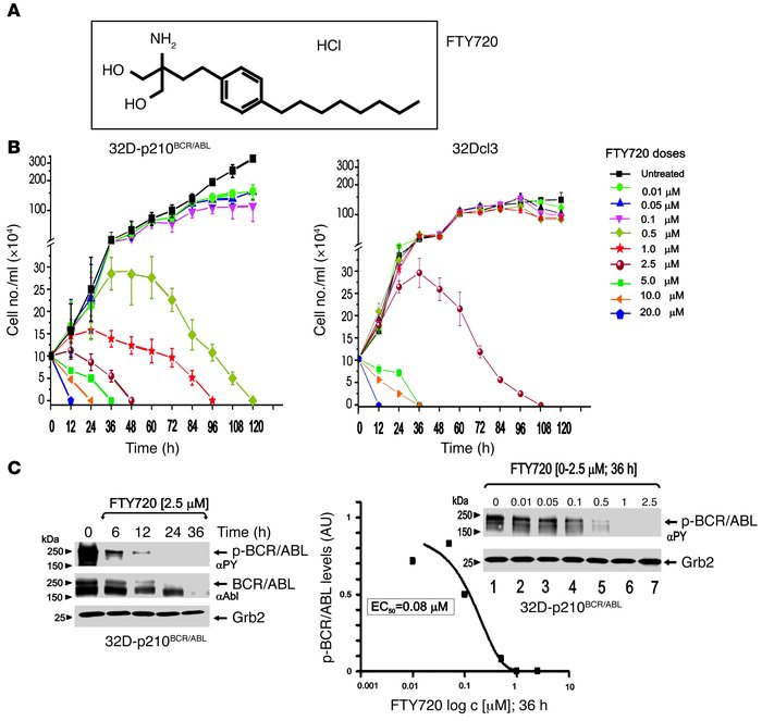 Dose-dependent effects of FTY720 in BCR/ABL-transformed cells. (A) Molec...