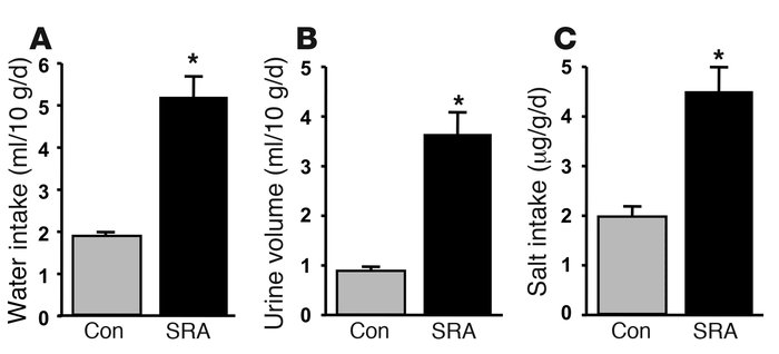 Volume homeostasis in SRA mice. Water intake (A), urine volume (B), and ...