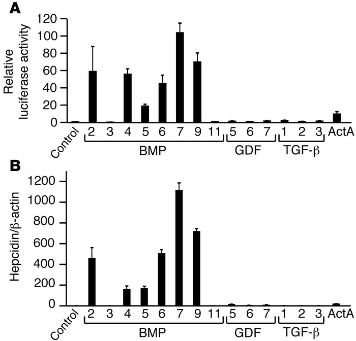 Induction of hepcidin expression by TGF-β/BMP superfamily ligands. (A) H...