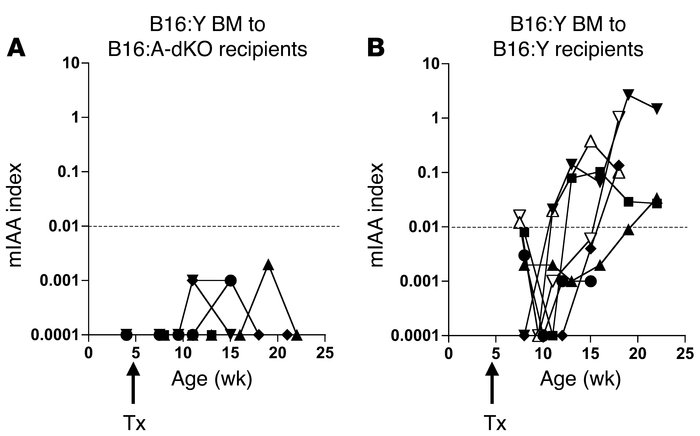 Bone marrow transplant with native B16:Y insulin genes is not sufficient...