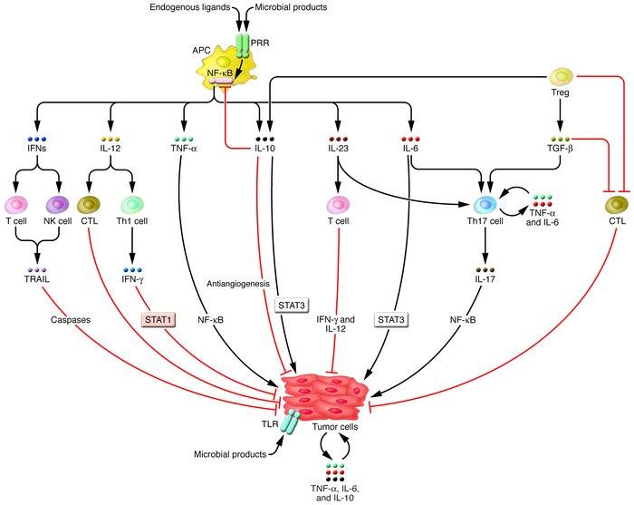 JCI - A cytokine-mediated link between innate immunity