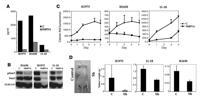 Blockade of IL-6 signaling with IL-6 shRNA inhibits growth of cell lines...