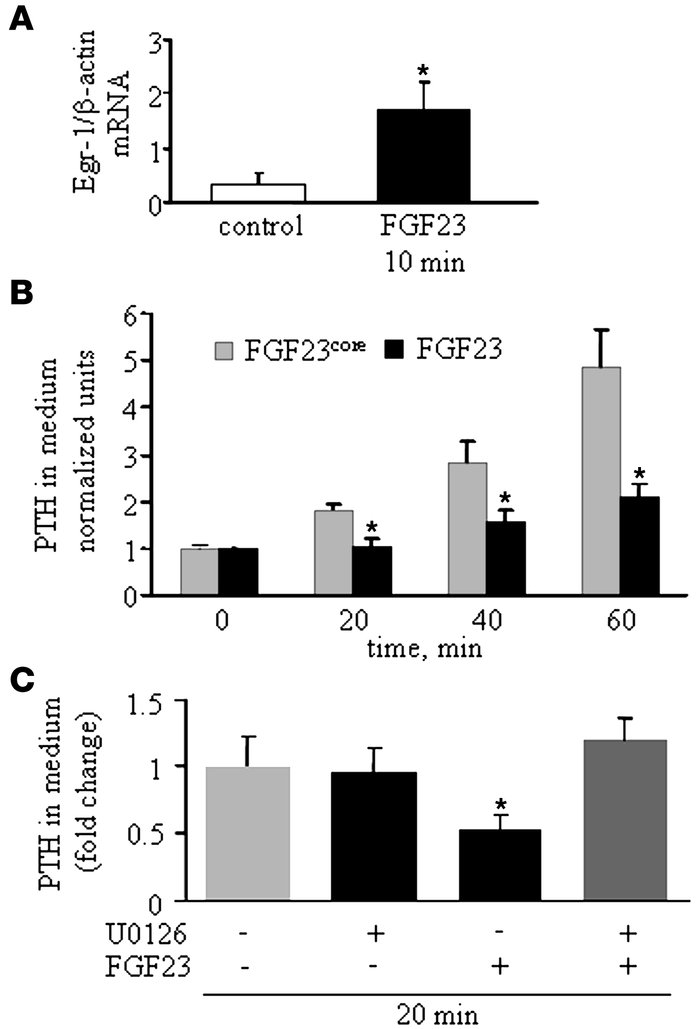 FGF23 decreases PTH secretion in vitro in isolated rat parathyroid gland...