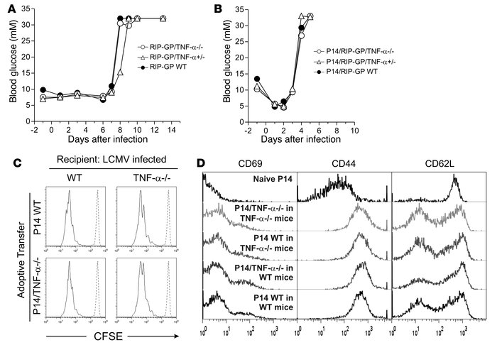 The absence of TNF-α does not alter the kinetics or magnitude of LCMV-in...