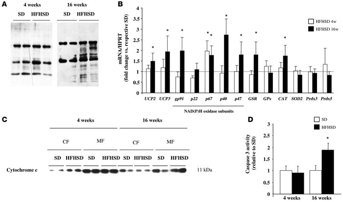Chronic HFHSD feeding induces oxidative stress in skeletal muscle. (A) I...