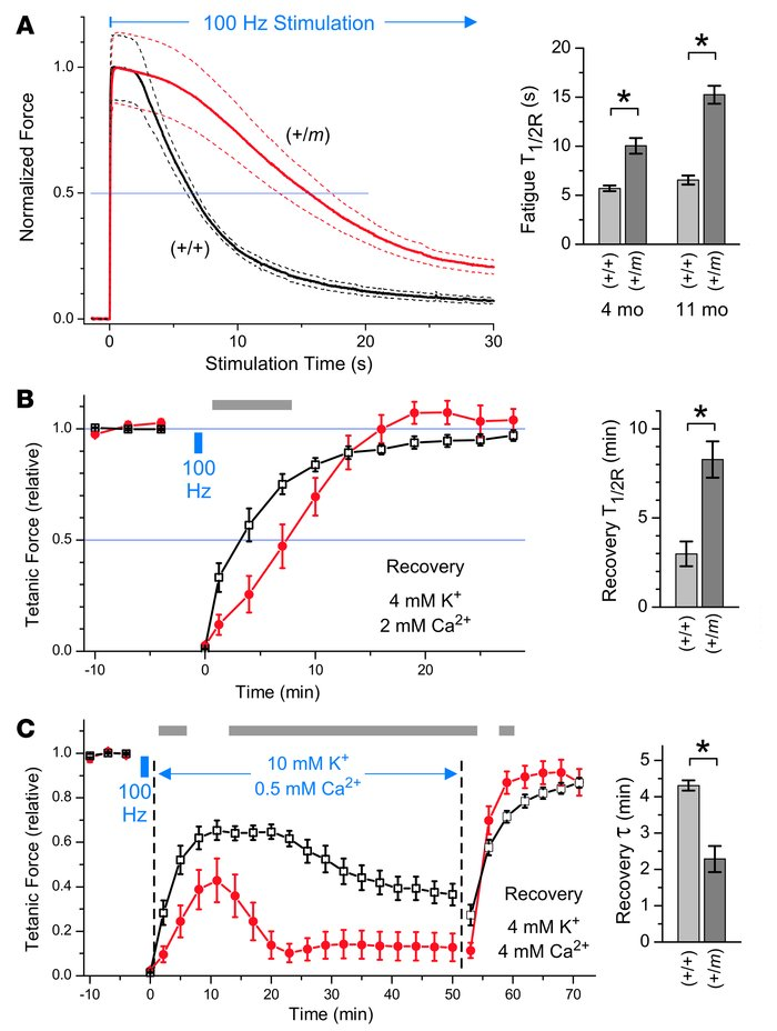 Mutant (+/m) EDL fatigued more slowly than control (+/+) muscle and was ...