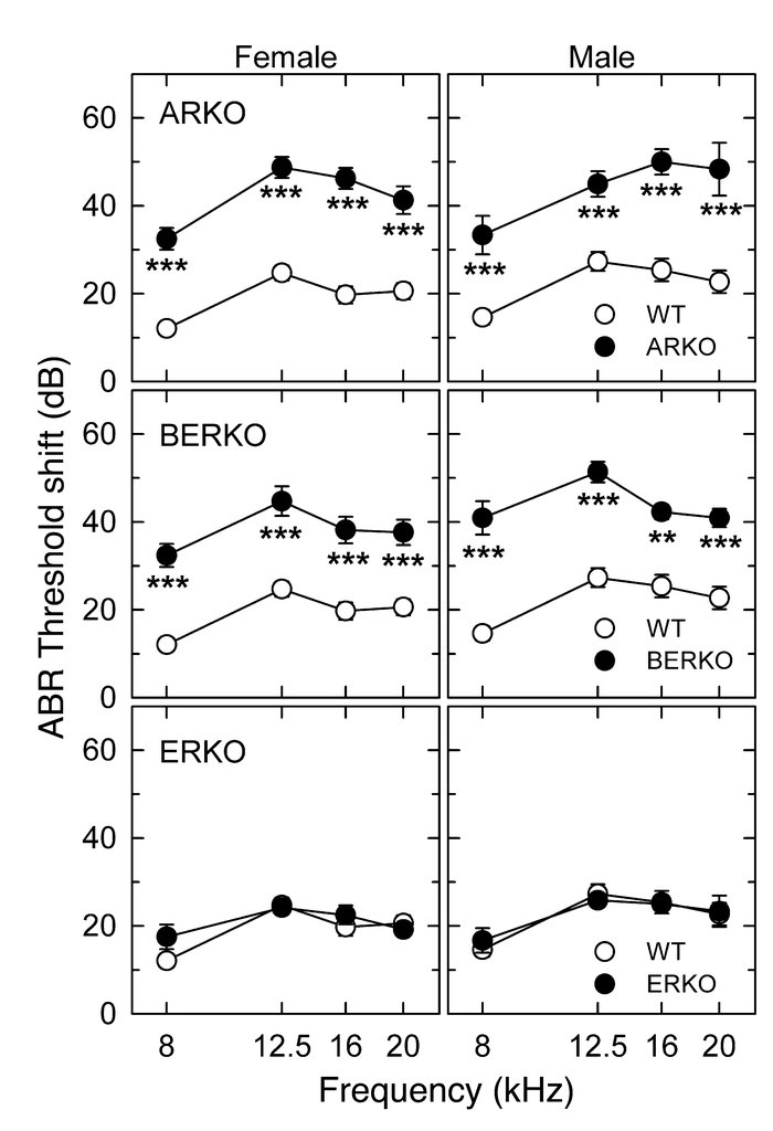 ABR threshold shifts 24 h after acoustic trauma. The same group of WT ma...