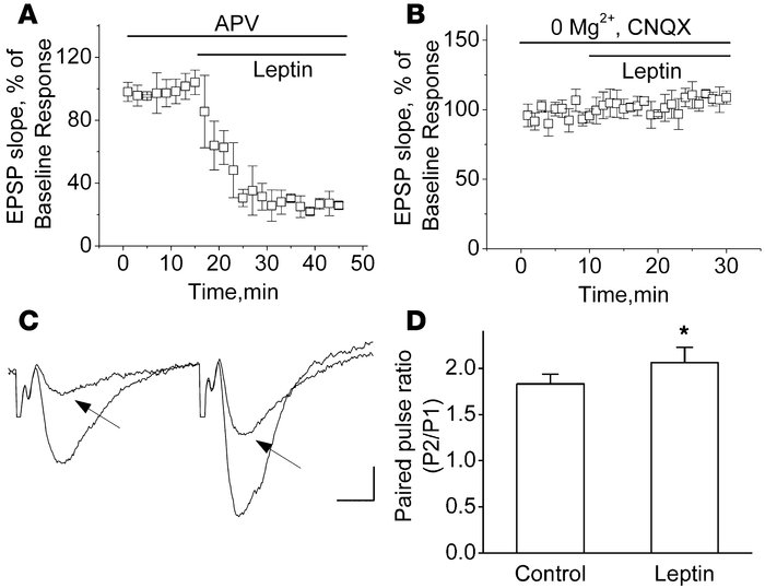 Leptin selectively inhibits the AMPAR-mediated component of the CA1 fiel...