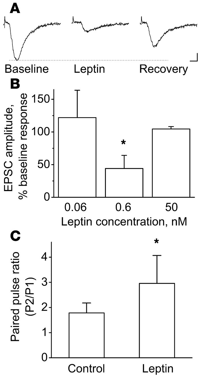Leptin inhibits AMPAR-mediated EPSCs obtained from voltage-clamped CA1 p...
