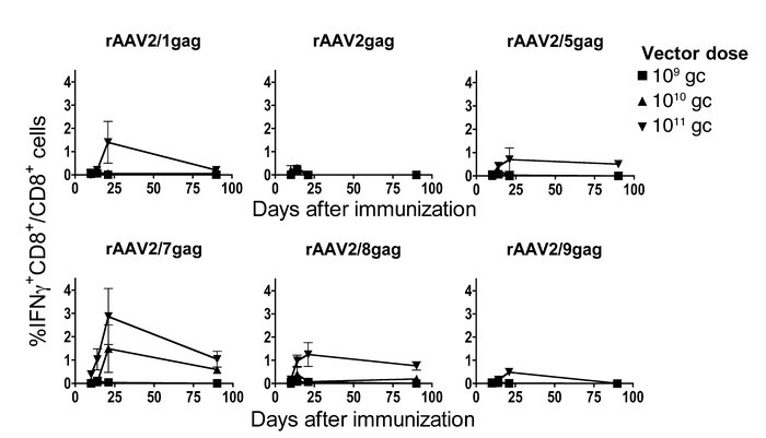 Vectors based on different AAV serotypes induce gag-specific CD8+ T cell...