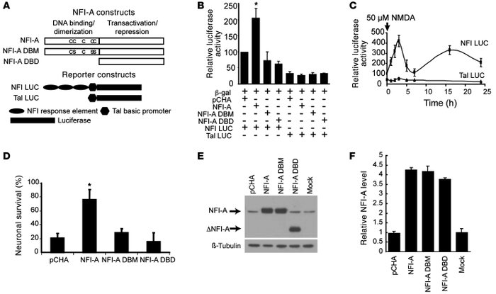 NFI-A protects neurons through its transcriptional activity. (A) Schemat...