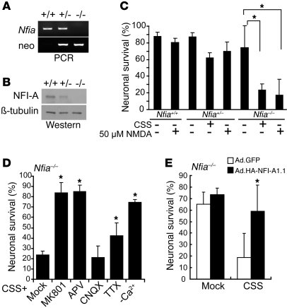 NFI-A–deficient neurons are sensitive to NMDA receptor activation. (A) G...