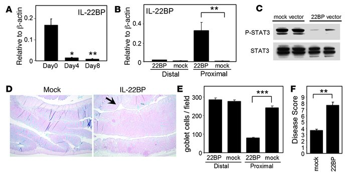 Enhanced mucus production mediates IL-22–induced rapid attenuation of UC...