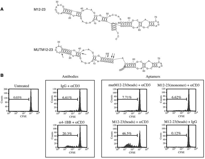 Characterization of M12-23 and mutM12-23 aptamers. (A) Sequence and comp...