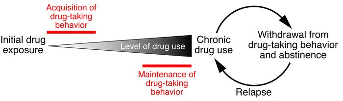 The cycle of addiction. Following the initial exposure to an addictive s...