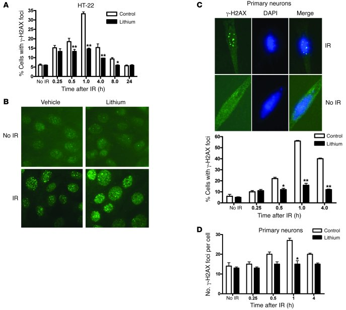 JCI - Lithium-mediated protection of hippocampal cells