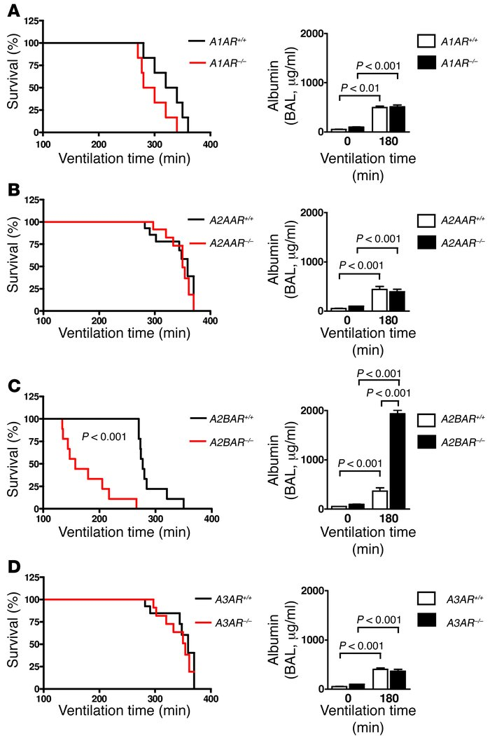 VILI in mice gene-targeted for individual ARs. Previously characterized ...