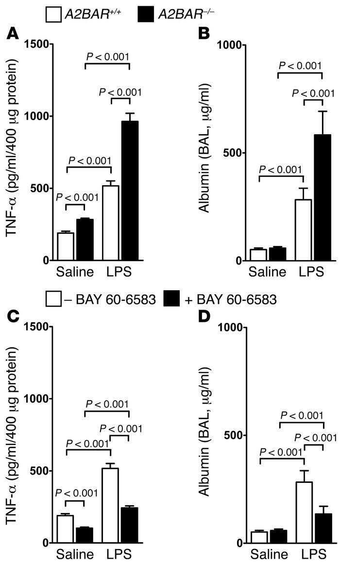 A2BAR signaling during LPS-induced lung injury. (A and B) A2BAR–/– and A...