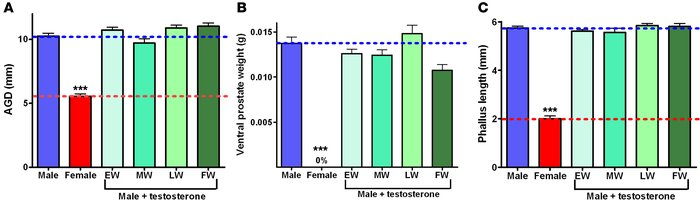 Exposure to exogenous testosterone in utero cannot advance or enhance de...