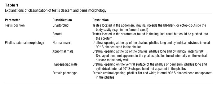 Explanations of classification of testis descent and penis morphology
