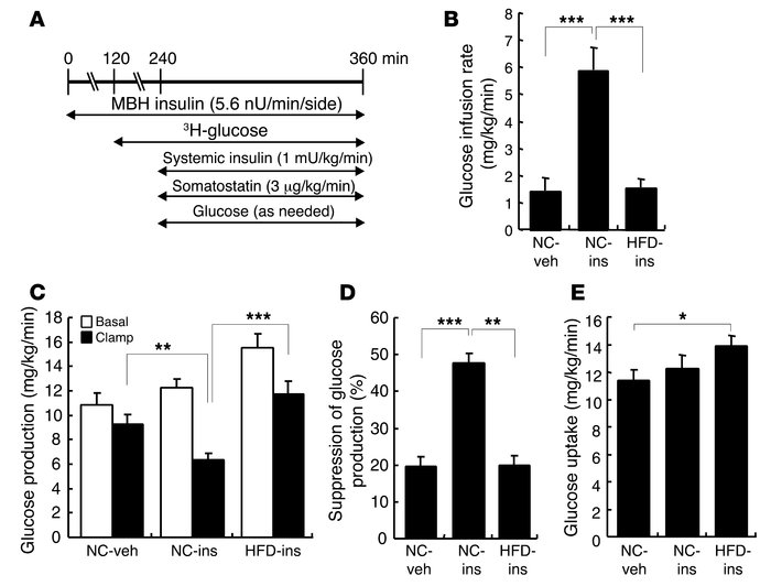 HFD feeding for 1 d induces insulin resistance in the brain-liver circui...
